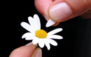 Does Love Arrive in Datings? (Plucking the Daisy)