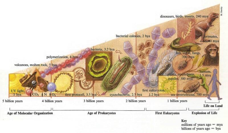 evolution-diagram