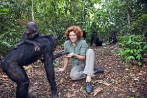 Founded by Claudine Andre in 1994, Lola ya Bonobo  just outside of Kinshasa in the  Democratic Republic of the Congo is the world's only sanctuary for orphaned bonobos. Picture: Martin Harvey / Photolibrary